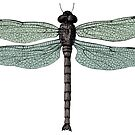 antique typographic vintage dragonfly by surgedesigns