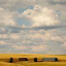 Farmland by Olga Zvereva