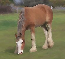 young Clydesdale by Cazzie Cathcart