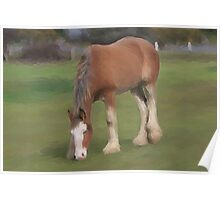 young Clydesdale Poster