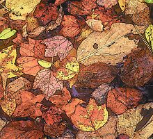 Leaves on the Ground by Rodney Williams
