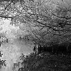 Mangrove by Douglas Barnes