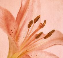 Pink Lily by AnaCBStudio
