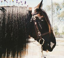 Monty - Profile by louisegreen