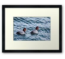Two Red Head Dusks at Harbourfront, Toronto, Ontario, Canada Framed Print