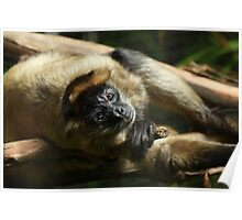 Black-Handed Spider Monkey Poster