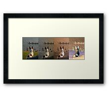 Jack Russel Panorama Framed Print