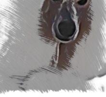 Poodles Supporting Bushfires Sticker