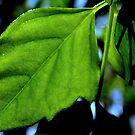 Single leaf by Cricket Jones