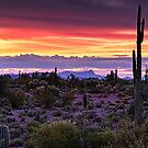 A Magical Desert Morning by Saija  Lehtonen