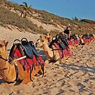 Another day's work, Cable Beach, Broome, Western Australia by Adrian Paul