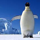 Emperor Penguin by Adam Wightman