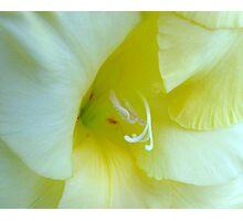 Gladioli Macro Photographic Print