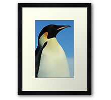 Modest Penguin Framed Print