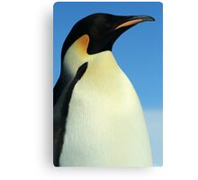 Modest Penguin Canvas Print