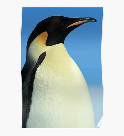 Modest Penguin Poster