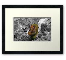 Moray Eel Framed Print