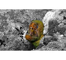Moray Eel Photographic Print