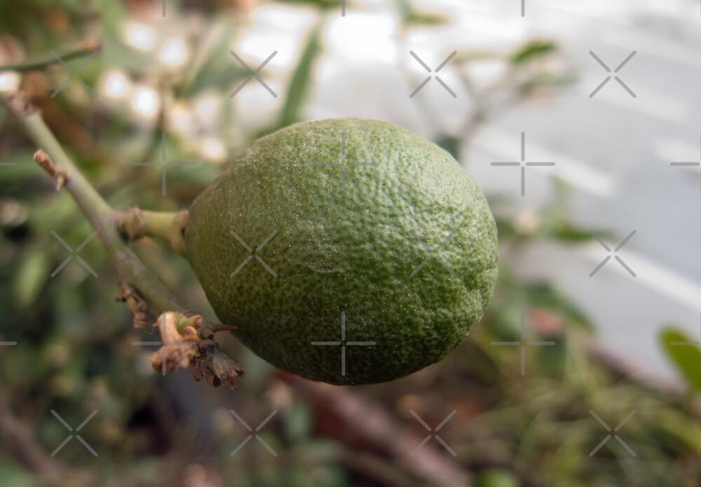 Close up of a lemon that is still growing by ashishagarwal74
