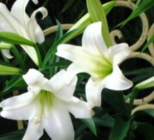 Easter Lilies Fill the Church Sticker
