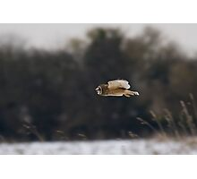 Short eared owl 9 Photographic Print