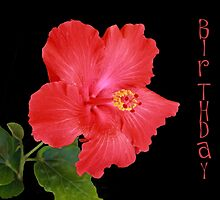 Hibiscus by bellecards