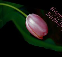 Pink Tulip by bellecards