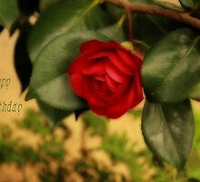 Camellia by bellecards
