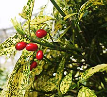 Red berries catching the daylight by Ms-Bexy