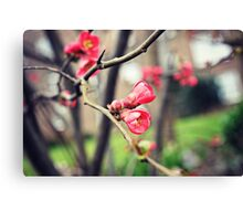 Springtime blossoms Canvas Print