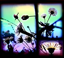 Defiant Fragility Triptych by dimarie