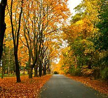 country road by Robyn Bohlen