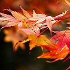 Autumn foliage by IYL86