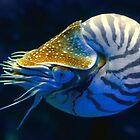 Nautilus by izan0306
