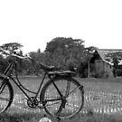 ricepadi bike  by christopher  bailey