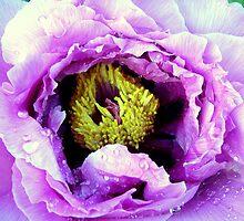 Wet Purple by sstarlightss