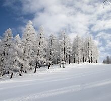Tree lined piste by Steve plowman