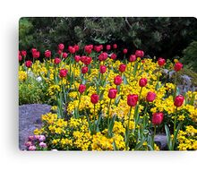Tulips on Display Canvas Print