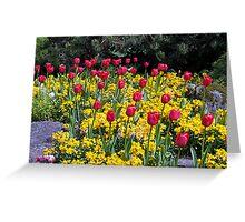 Tulips On Display Greeting Card