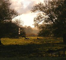 Early Morning by Melissa Sampson-Kovacs