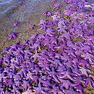 Starfish by Alexandria
