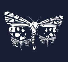 :Moth 3.1 [The White Wing] by B C
