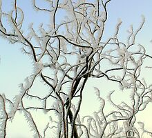 Frozen Willow by lochnesslife