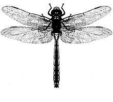 Dragonfly by Zehda