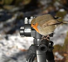 Photographers Robin by Rob Outram