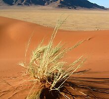 The Namib - Namibia by Lisa Germany