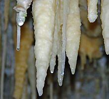 Stalactite in Lake Cave, Margaret River Western Australia by Lisa Evans