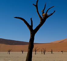 Dead Vlei - Namibia by Lisa Germany