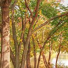 trees by the lake by henuly1