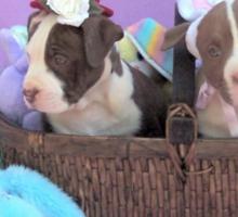Easter Puppies Sticker